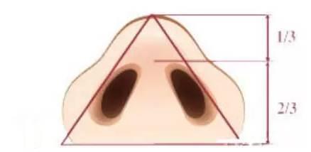 理想的鼻子