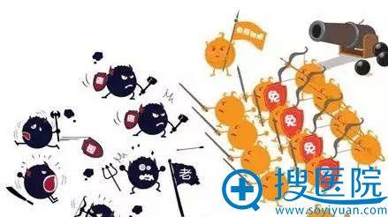免疫细胞和衰老细胞的对抗