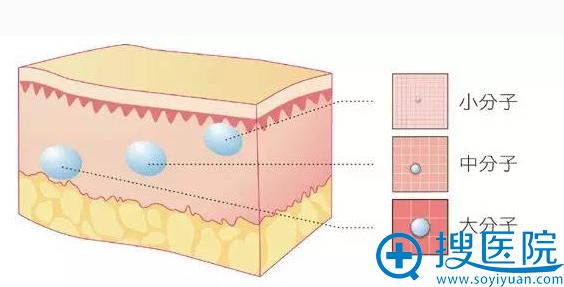 不同分子大小注射不同位置