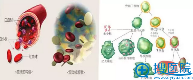 京韩独有的PRP细胞活化