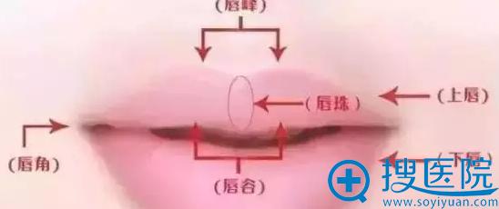 唇珠位置示意