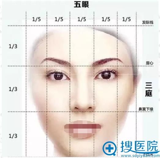 鼻子在面部三庭五眼的比例