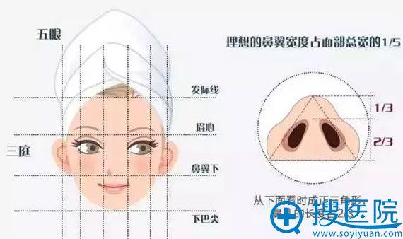 标准鼻翼形态及宽度