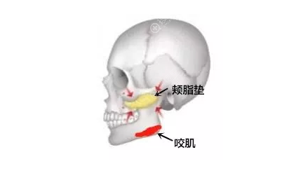 上海首尔丽格颊脂垫位置图片