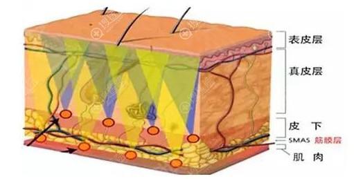 皮肤结构层次图