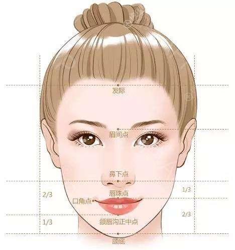 面部美学标准图