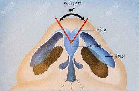 鼻部美学标准