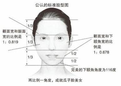 标准脸型图