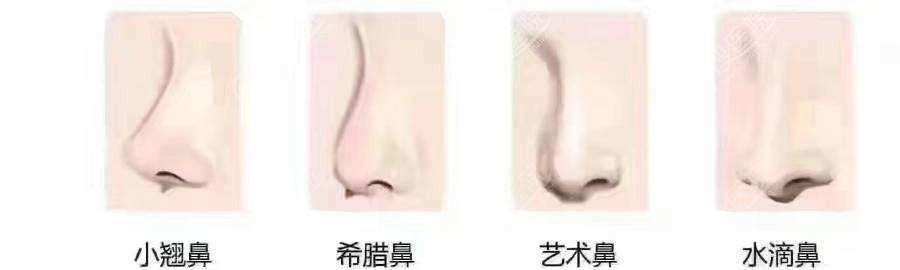 常见的鼻部型态