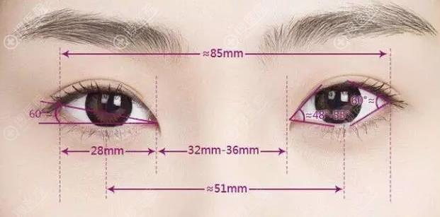 双眼皮美学标准