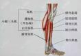 不想去韩国在北京做了小腿肌肉阻断术62天来汇报结果!