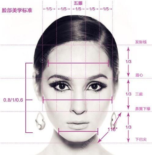脸部美学标准示意图