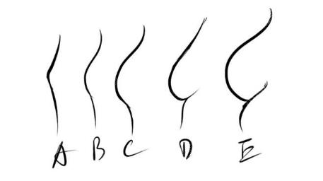 不同大小胸部形态图片参考